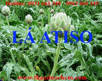 Mua bán lá atiso tại quận Long Biên giúp mát gan giải độc rất hiệu quả