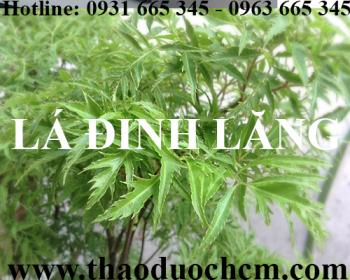 Mua bán lá đinh lăng tại huyện Thường Tín giúp điều trị đau lưng hiệu quả