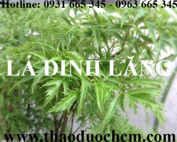 Mua bán lá đinh lăng tại quận Long Biên giúp chống đổ mồ hôi trộm