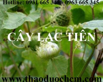 Mua bán cây lạc tiên tại huyện Thạch Thất có công dụng lợi tiểu rất tốt