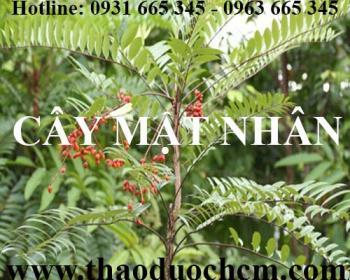 Địa chỉ bán cây mật nhân tăng cường sinh lý tại Hà Nội uy tín nhất