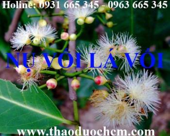 Mua bán nụ vối tại huyện Ứng Hòa rất tốt trong việc điều trị tiểu đường
