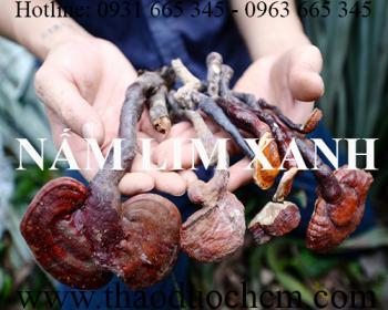 Mua bán nấm lim xanh tại huyện Hoài Đức giúp điều trị xơ gan cổ trướng