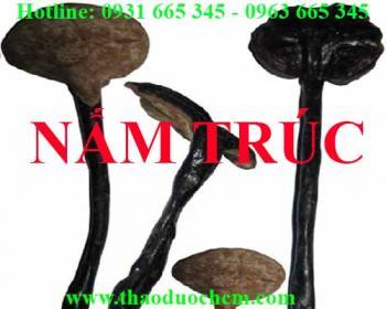 Mua bán nấm trúc tại huyện Hoài Đức hỗ trợ bồi bổ sức khỏe hiệu quả