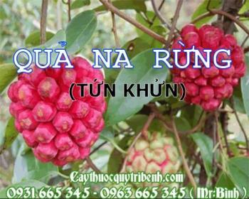 Mua bán quả na rừng tại Quảng Bình giúp trị sản hậu ứ đau sưng vú