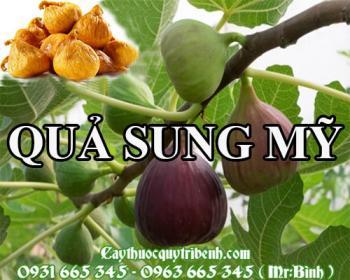 Mua bán quả sung mỹ tại Tuyên Quang rất tốt trong việc trị viêm mủ da