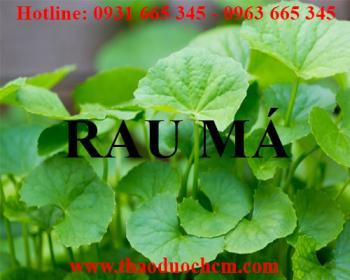 Địa chỉ bán rau má điều trị đau bụng tiêu chảy uy tín chất lượng nhất