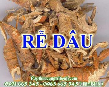 Mua bán rễ dâu tại quận Hoàng Mai rất tốt trong việc điều trị viêm phế quản