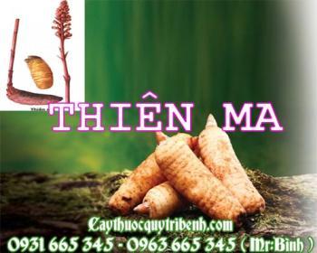 Mua bán thiên ma tại Hà Nội uy tín chất lượng tốt nhất