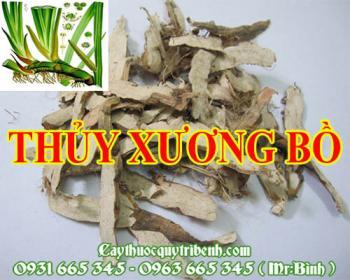 Mua bán thủy xương bồ ở huyện Bình Chánh giúp tăng cường chức năng tiêu