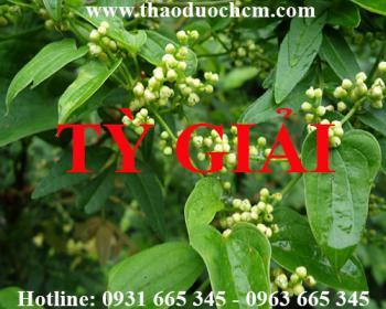 Mua bán tỳ giải tại huyện Thanh Oai có tác dụng trị nhức mỏi hiệu quả nhất