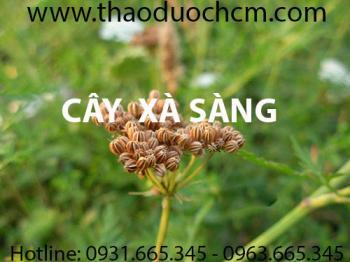 Mua bán cây xà sàng tại Thái Bình có công dụng điều trị viêm âm đạo