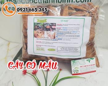 Mua bán cây cỏ máu ở huyện Bình Chánh giúp mạnh gân cốt, giảm đau nhức