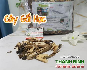 Mua bán cây gối hạc ở quận Tân Phú giúp điều trị đau nhức do tê thấp