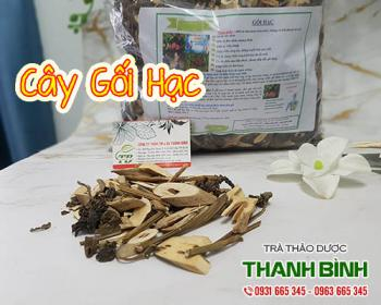 Mua bán cây gối hạc ở huyện Cần Giờ làm giảm đau lưng, đầu gối ở người già