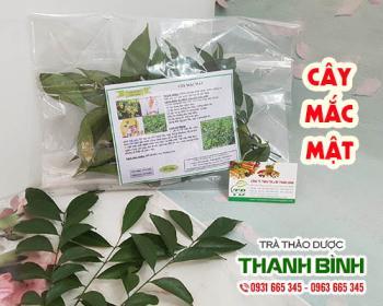Mua bán cây mắc mật ở huyện Bình Chánh giúp giảm đau nhức khi thấp khớp