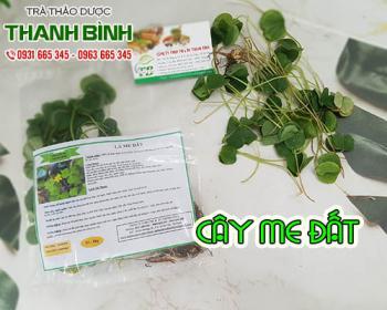 Mua bán cây me đất tại huyện Thạch Thất giúp điều trị viêm họng và sốt cao