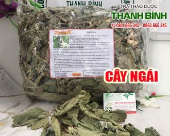 Mua bán cây ngái tại TPHCM uy tín chất lượng tốt nhất