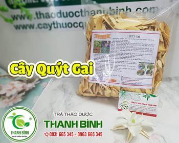 Mua bán cây quýt gai ở quận Bình Thạnh giúp điều trị ăn khó tiêu, ợ hơi