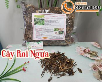 Mua bán cây roi ngựa ở quận Tân Phú giúp điều trị viêm và xơ gan rất tốt