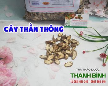 Mua bán cây thần thông tại TPHCM uy tín chất lượng tốt nhất