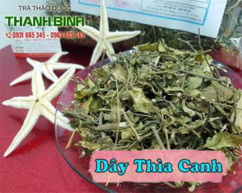 Địa chỉ bán cây cỏ ngọt tại TPHCM giá tốt nhất - Tác dụng của cây cỏ ngọt