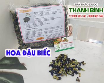 Mua bán hoa đậu biếc tại huyện Phú Xuyên hỗ trợ làm đẹp da chống lão hóa