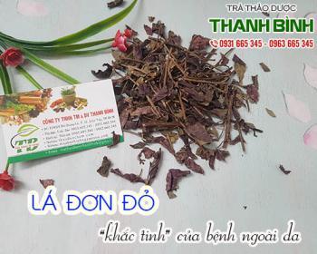 Mua bán lá đơn đỏ ở quận Tân Bình giúp điều trị tiêu chảy và đau bụng