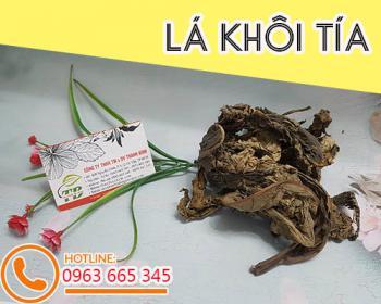 Mua bán lá khôi tía tại TPHCM uy tín chất lượng tốt nhất