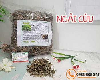 Mua bán ngải cứu ở quận Phú Nhuận giúp điều trị chứng bụng lạnh, biếng ăn