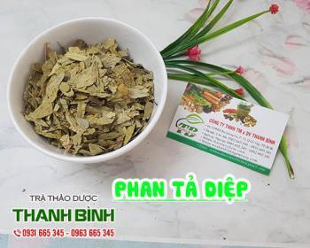 Mua bán phan tả diệp tại huyện Thanh Trì giúp lợi tiêu hóa nhuận tràng