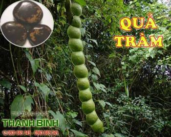 Mua bán quả tràm ở quận Bình Tân giúp giảm đau do viêm loét dạ dày rất tốt