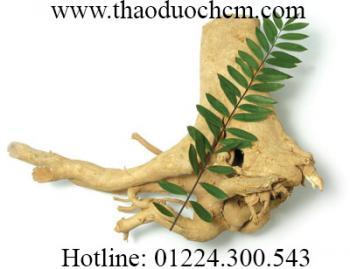 Mua bán cây mật nhân ở cần giờ giúp điều trị bệnh đau nhức xương khớp